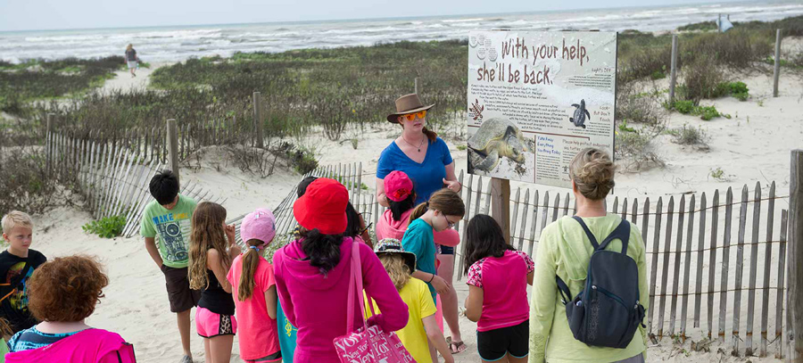 Beachgoers learn about turtles at the Galveston Island State Park.