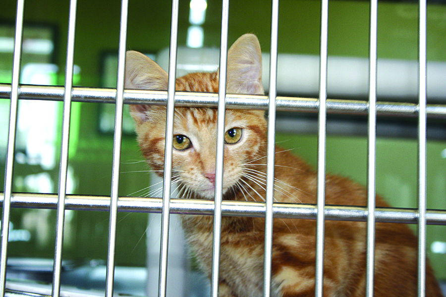 Area-wide adoption event planned to clear shelters Aug. 15