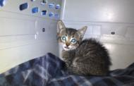 In-Sync adopts domestic feline