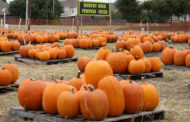 Take your pick of pumpkins