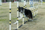 Wylie dog, trainer compete in NYC