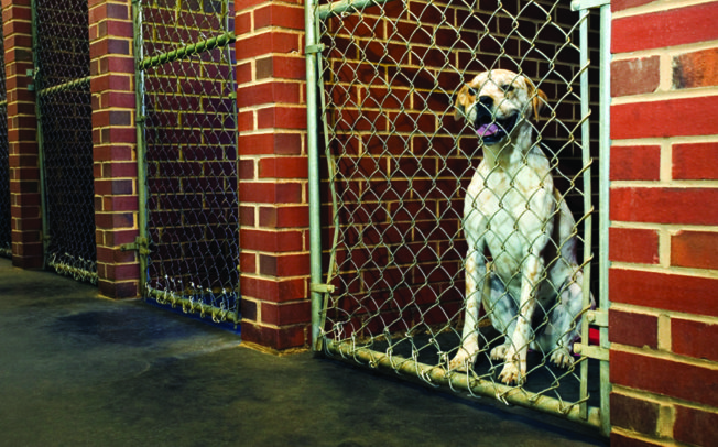 Shelter dogs in need of good homes