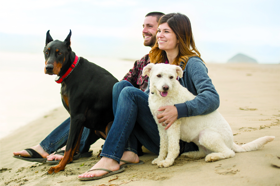 10 steps to prep your pet for travel