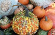Plentiful pumpkins just a short car ride away