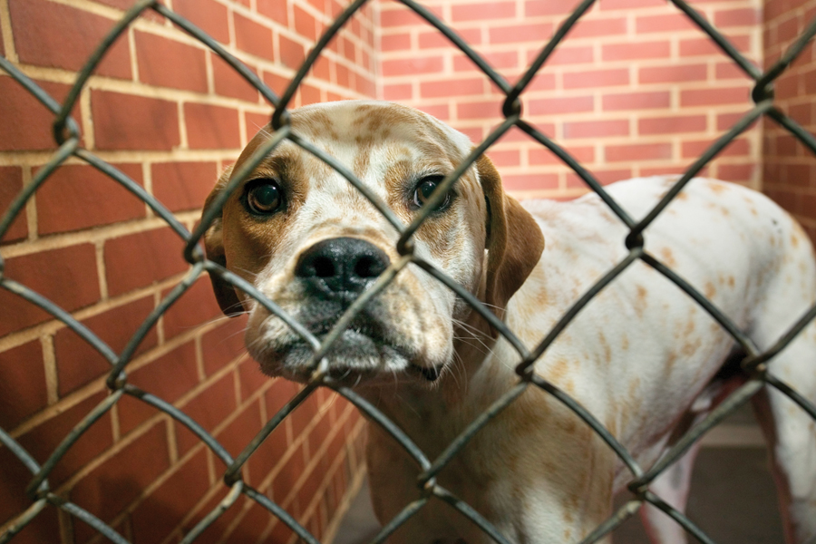 Clear the Shelters Aug. 17