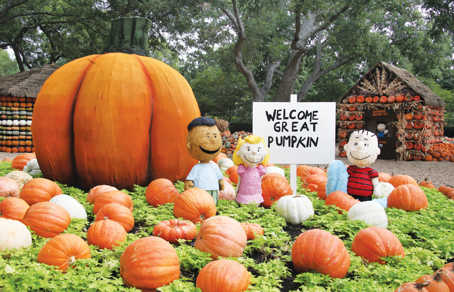 In search of great pumpkin fun