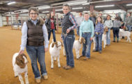 FFA and 4-H members compete in county show