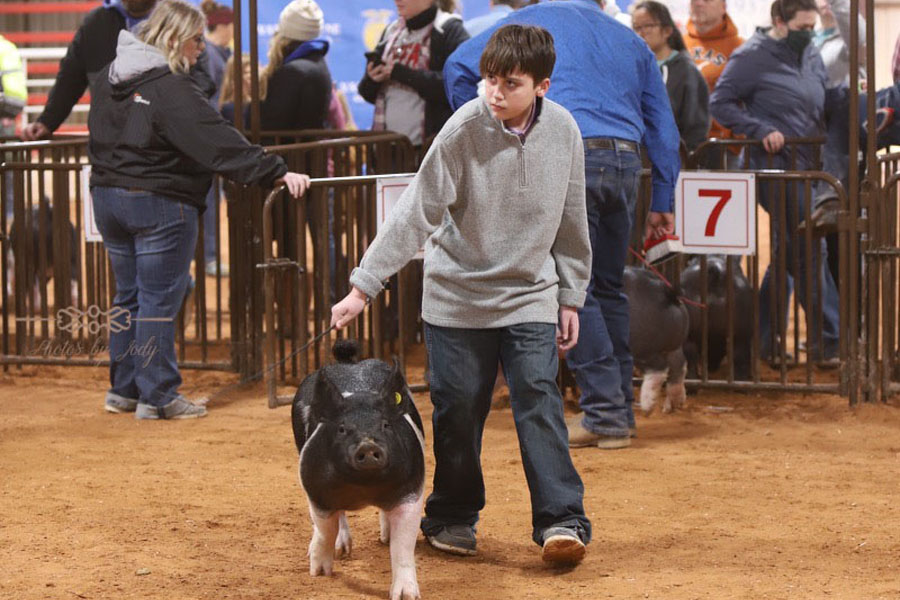 Stock show goes on despite pandemic