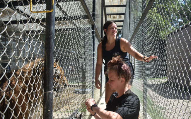 In-Sync recognizes zookeepers